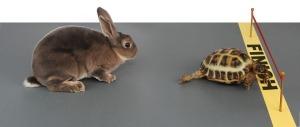 tortoisevshare